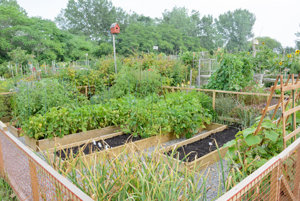 Community gardening = awesomeness.